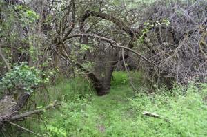 Greenery in Chamna