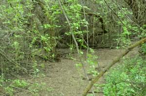 More Chamna Greenery