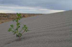 Hearty Desert Vegetation