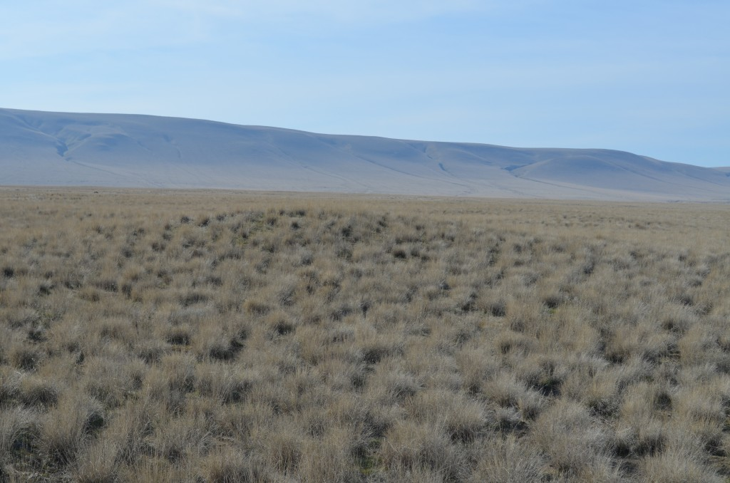 Rattlesnake Mountain in the Background with a Bergmound in the Foreground