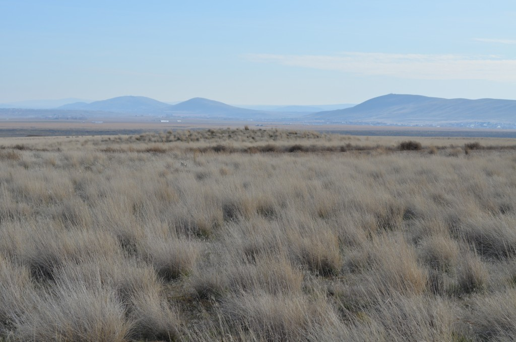 Badger, Candy and Red Mountains (L to R) with a Large Bergmound in the Foreground (click pic to enlarge)
