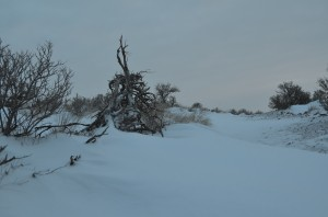 Drifts of Snow Across the Badger Mountain Trail