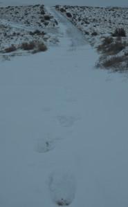 Virgin Footprints Across the Snow on Badger Mountain
