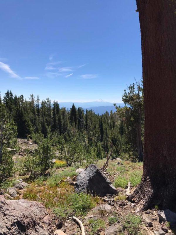 Mt. Adams climb vista from trail 183