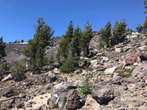 Rough terrain on Morrison Creek drainage on Mt. Adams